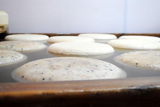 cheese in brine
