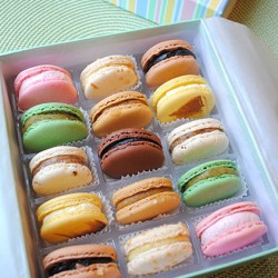 Sucre Signature Macaron Collection