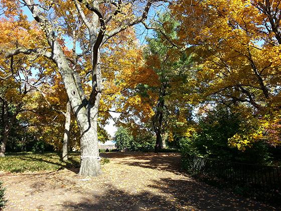 Vanderbilt in the Fall