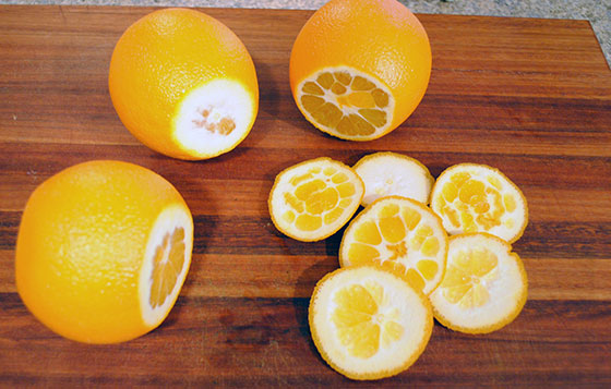 How to Candy Orange Peel | So, How's It Taste?