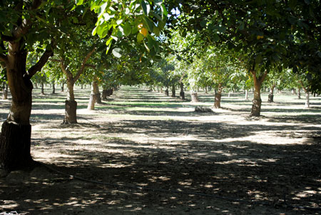 2014 California Walnut Harvest Tour