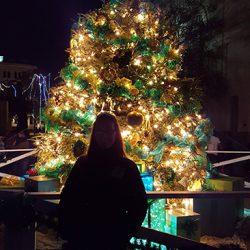 Christmas Tree at San Fernando Cathedral